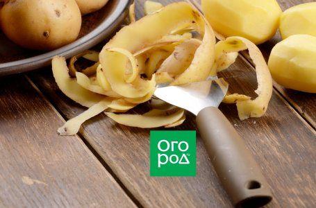 Modalități neobișnuite de a folosi cartofii obișnuiți 9