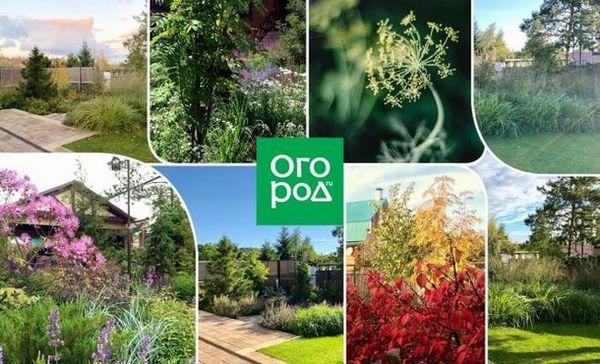 Šarm i njegovan izgled tijekom cijele godine - kako stvoriti prekrasan vrt na maloj parceli