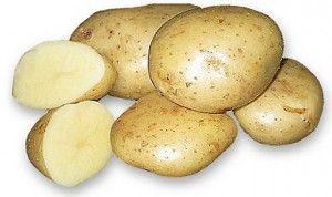 Descrierea varietății de cartofi albi de zăpadă