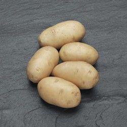 """Descrierea varietății de cartofi """"victoria`"""