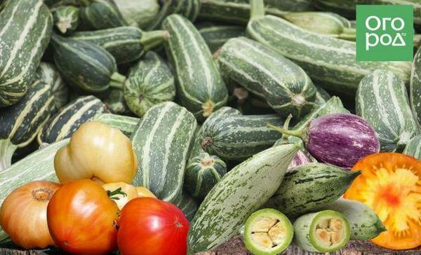 Bicolor zelenina: oplatí sa začať doma s takými neobvyklými odrodami 1
