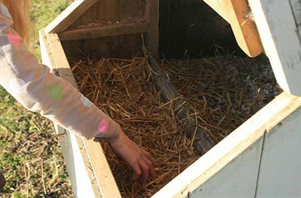 Prečo kurčatá neponáhľajú: hlavné dôvody zníženia produkcie vajec a čo robiť