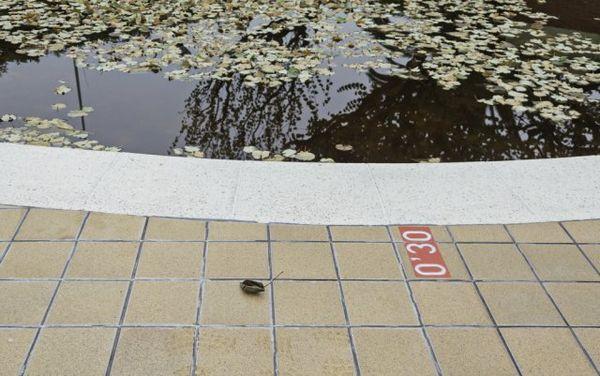 De ce apa din piscina exterioară devine verde și cum să o prevină? 2