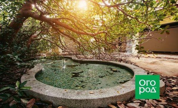 De ce apa din piscina exterioară devine verde și cum să o prevină? 1