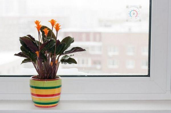 Pomozite sobnim biljkama da se dokažu u svoj svojoj slavi! 2