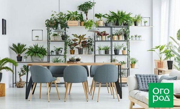 Pomozite sobnim biljkama da se dokažu u svoj svojoj slavi! 1