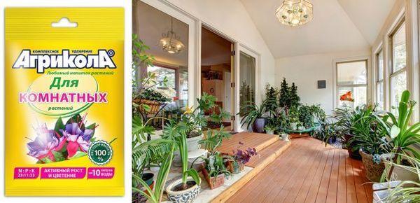 Pomozite sobnim biljkama da se dokažu u svoj svojoj slavi! 3