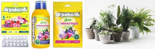 Pomozite sobnim biljkama da se dokažu u svoj svojoj slavi! 4