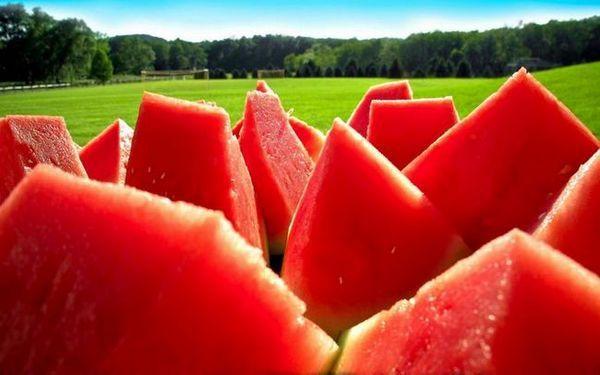 Výsadba melónov na sibíri na otvorenom priestranstve a v skleníku