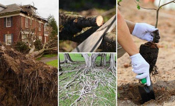 Výsadba stromov a kríkov - bezpečnostné pravidlá
