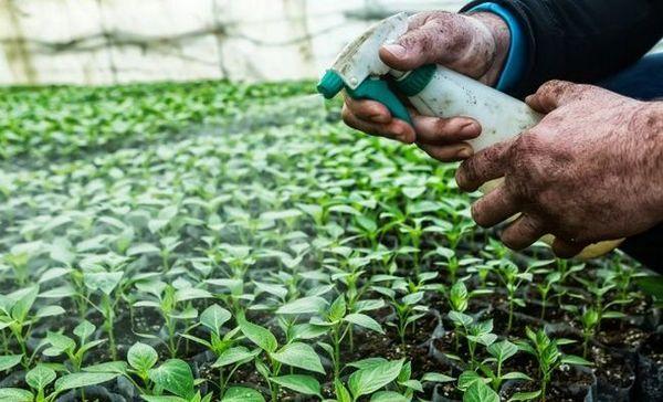 Používanie pesticídov a frekvencia ošetrení - rady biológa-výskumníka