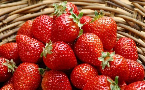 Albion záhradná jahoda - odrody, výsadba, rozmnožovanie, starostlivosť