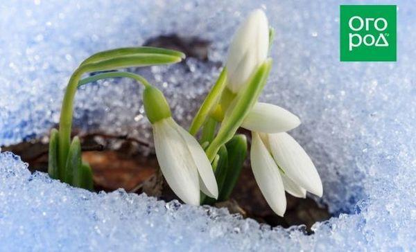 Previzorii vremii au spus când va veni primăvara în rusia