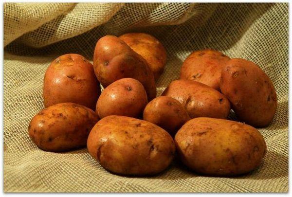 Soiul de cartofi zhuravinka este mândria selecției din belarus