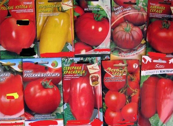 Sorte rajčice: kako pronaći najukusniju i najproduktivniju sortu? 3