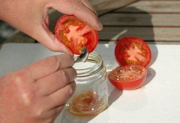 Sorte rajčice: kako pronaći najukusniju i najproduktivniju sortu? 5
