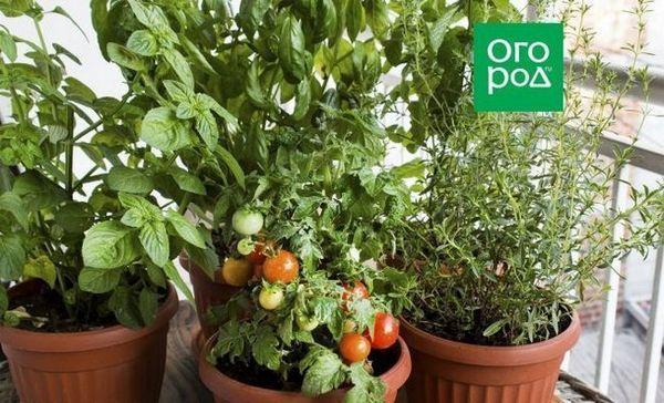 Čerstvá zelenina a zelenina na nový rok - koľko je hodín v dome