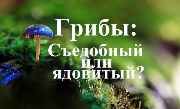 Test: gljive. Jestiva ili otrovna?