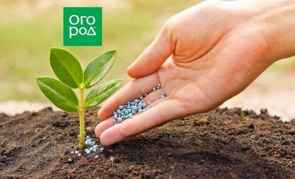 17 Najlepších výživových článkov - všetko, čo ste chceli vedieť o hnojivách