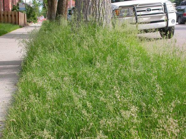 Tráva pre trávnik - čo sú a čo zvoliť 3