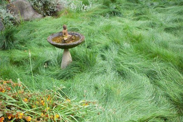 Trava za travnjak - što su i što odabrati 4