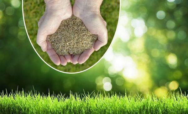 Trava za travnjak - što su i što odabrati