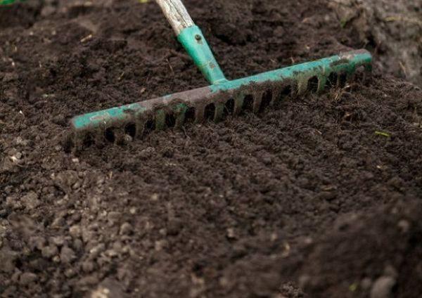 Vaš prvi vrt: kako saditi jagode u otvoreno tlo u proljeće 3