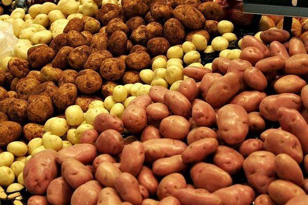 Dăunători de cartofi: descriere, metode de protecție