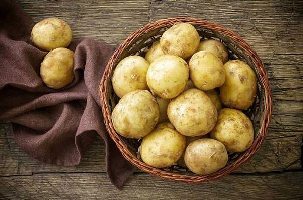 Cultivarea cartofilor timpurii în diferite regiuni ale rusiei