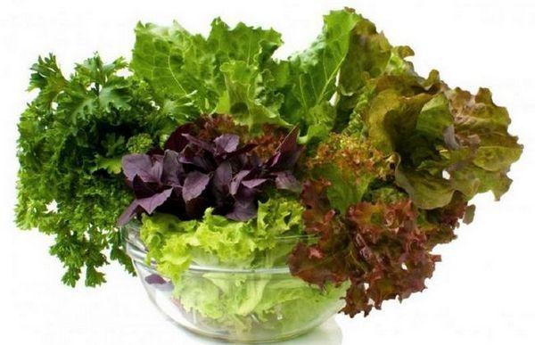 Uzgoj zelenila: što saditi, kako se brinuti i zaštititi od bolesti i štetočina