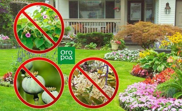 Pentru care plantele de pe site pot fi amendate și urmărite penal