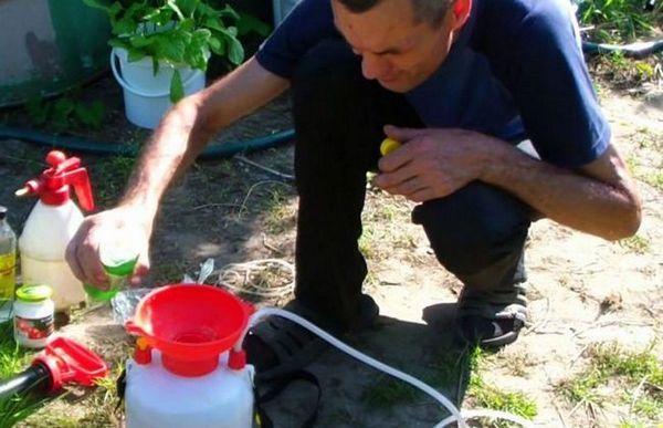 Săpun verde - un produs biologic pentru protejarea plantelor de dăunători